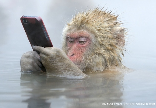 Animal with Mobile phone